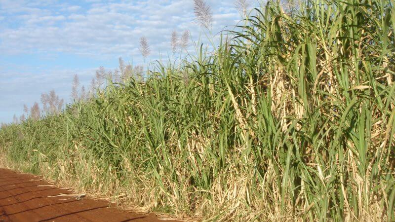Bioplast sukkerørr